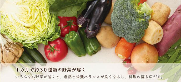 「だけ」料理のすすめコースは1ヶ月で約30種類の野菜が届く